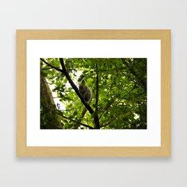 Peek a boo Squirrel Framed Art Print