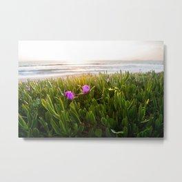 California Wildflowers in Half Moon Bay Metal Print