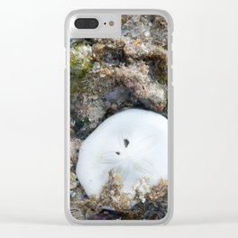 Sand Dollar in the Fiji Reef at Low Tide Clear iPhone Case