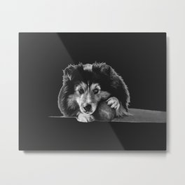 "Black and white puppers ""Curious"" Metal Print"