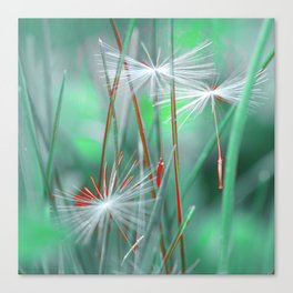 Dandelion weightlessness Canvas Print
