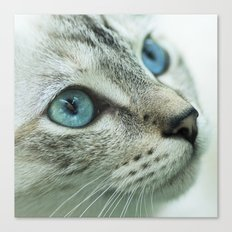 Mimi the cat Canvas Print