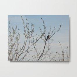Lone Sparrow Metal Print