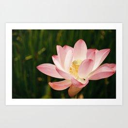 Radiant Lotus Art Print