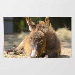 Donkey Foal Rug