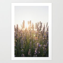 Glimpses of summer Art Print