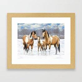 Buckskin Pinto Paint Quarter Horses In Snow Framed Art Print