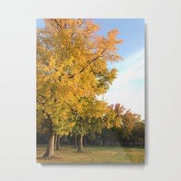 yellow autumn trees Metal Print