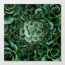ORNATE JADE & DARK GREEN SUCCULENT  GARDEN Canvas Print