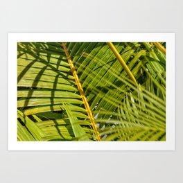 Green palm Art Print