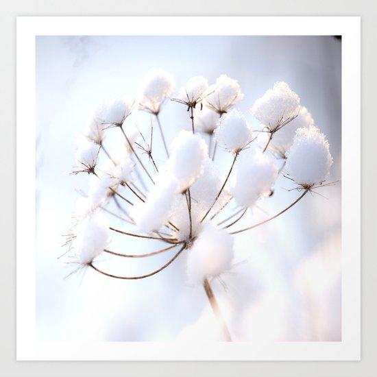 Snow covered dryflower Art Print