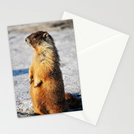 Marmot Belly Stationery Cards
