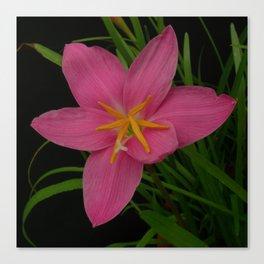 Pretty Pink Rain Lilies Canvas Print