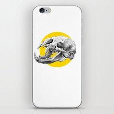 Bear Skull iPhone & iPod Skin