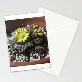 Blooming Jewel Plant Stationery Cards