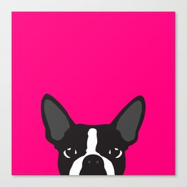 Boston Terrier Hot Pink Canvas Print