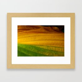 Green to Yellow  Framed Art Print