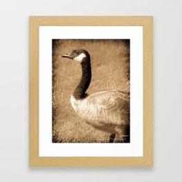 Gander Framed Art Print