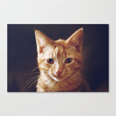 Kitty 2 Canvas Print