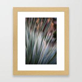 Arizona Agave Framed Art Print
