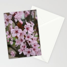 Cherry Plum Blossoms Stationery Cards