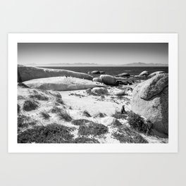 Penguin colony on Boulders Beach - Cape Town, South Africa Art Print