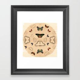 Butterfly Coordinates Framed Art Print