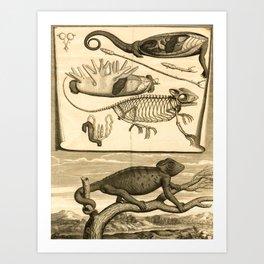 Vintage Scientific illustration, 1669 (Kameleon) Art Print