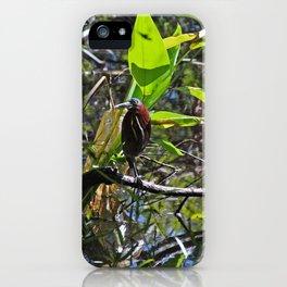 A Green heron in Corkscrew- horizontal iPhone Case