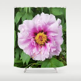 Rose and mauve peony with a heart of gold Shower Curtain