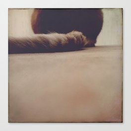 it's a tail Canvas Print
