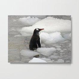 Gentoo Penguin in Ice Metal Print
