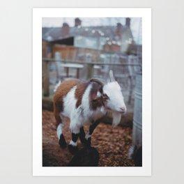 Goaty McGoatface Art Print
