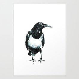 Pied Crow Art Print