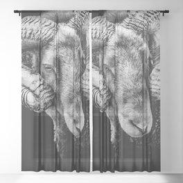""" Reggie "" the ram Sheer Curtain"