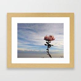 Flower at the Top of Narga Kot  Framed Art Print