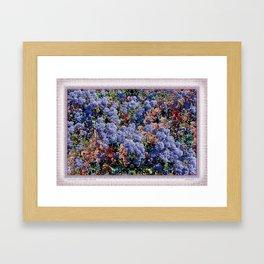 CEANOTHUS JULIA PHELPS ABSTRACT Framed Art Print