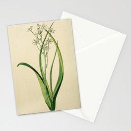Flower 1853 ornithogalum chloroleucum Green and White Ornithogalum20 Stationery Cards