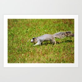 Southern Fox Squirrel Art Print