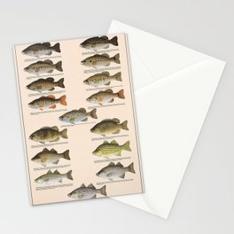 Illustrated Freshwater Bass Fish Identification Chart Stationery Cards