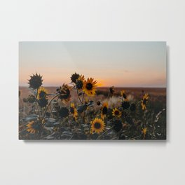 Suzy Sunset Metal Print