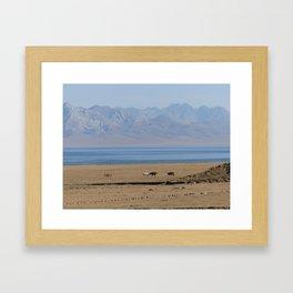 Wild horses at lake Song Kul, Kyrgyzstan Framed Art Print