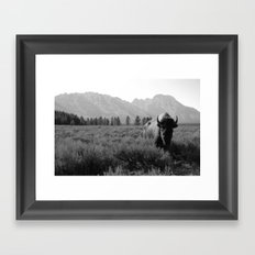 Lone Buffalo Framed Art Print
