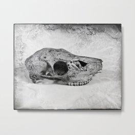 Whitetail Deer Skull (Doe) - 8x10 Tintype Photo Metal Print