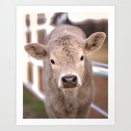 Spring Calf Art Print