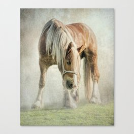 Gypsy in the morning mist Canvas Print