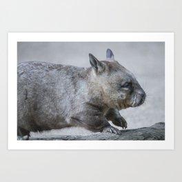 Australian Wombat Art Print