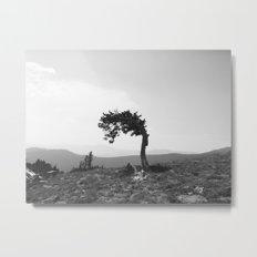leaning tree Metal Print