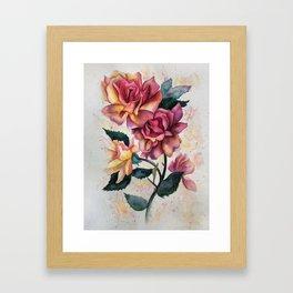 Fresh Tea Roses Framed Art Print