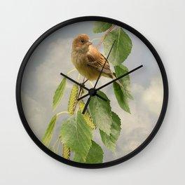 Indigo Bunting on Birch Tree Wall Clock